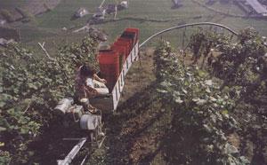 monorotaia in Valtellina